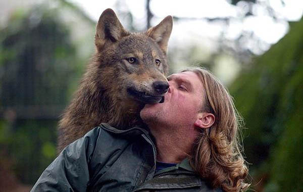 """英""""狼人""""养狼遭邻居抱怨后搬家 转养混血狼"""