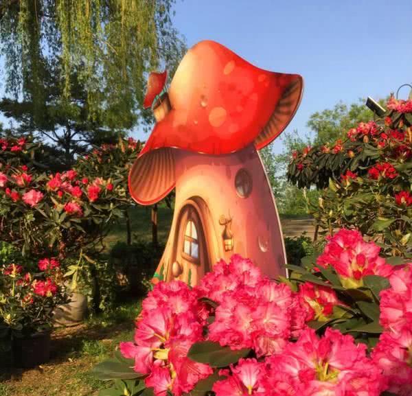 世界花卉大观园名品月季花展开幕 月季花海五彩斑斓