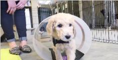 导盲犬是怎么被训练出来的?