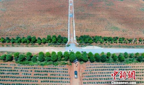 江西千亩蓝莓进入采摘期 产值上亿销全国
