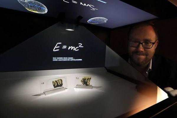 德国博物馆展出爱因斯坦大脑部分切片