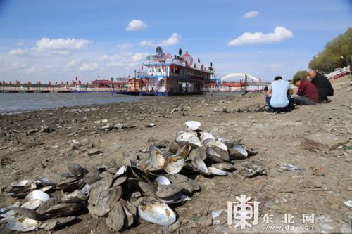 松花江哈尔滨段现大面积江底 市民挖到大量大蛤喇