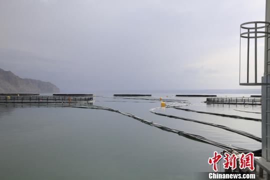 """青海三文鱼食用存安全风险?实地探访青海最大""""三文鱼""""鱼厂"""