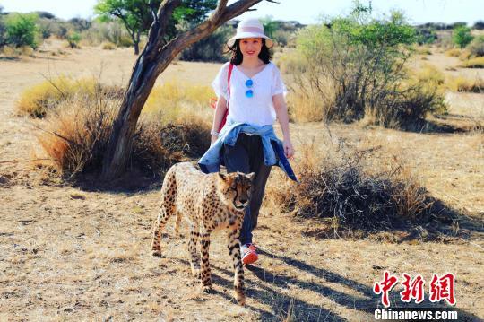 中国侨网牟昶在野生动物保护基地与猎豹合影。受访者提供