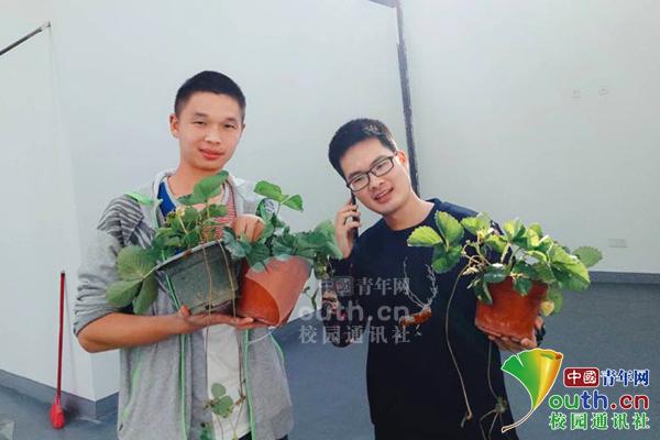 四川某高校种1700盆草莓 学生每天要写种植报告