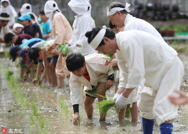 韩国儿童着传统装束 在公园学种水稻