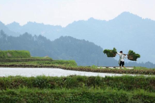 贵州丹寨夏日农耕忙