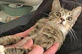 我怀孕了?丹麦一小猫发现怀孕后表情滑稽