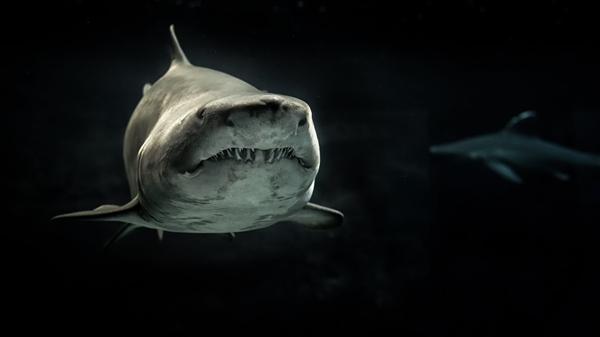 两条12英尺高的大白鲨在格鲁吉亚海岸附近出没