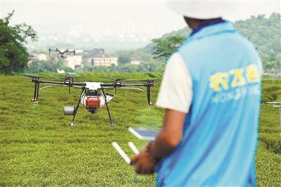 西湖区龙井茶园全域实施无人机飞防植保 政府买单