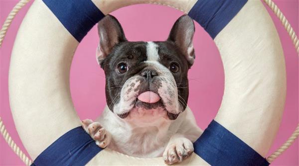 想预测狗狗每天都在做什么?AI可以告诉你答案