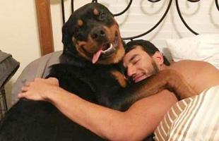 你这样的狗子能让我笑一天