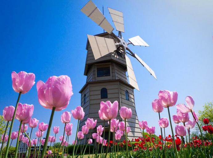 荷兰已开放实习签证 中国学生毕业两年内都可申请