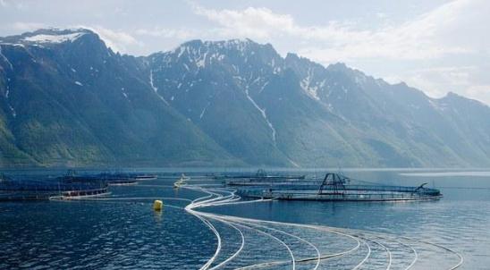 为让更多人吃上三文鱼 养殖户用上机器人和激光