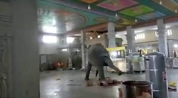 悲剧!印度一大象突然发怒将主人踩死