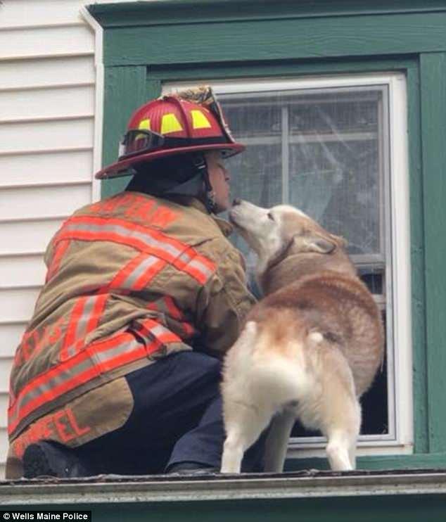 暖心!美国一宠物狗获救后向消防员献吻表达谢意