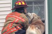 暖心!狗狗获救后向消防员献吻表达谢意