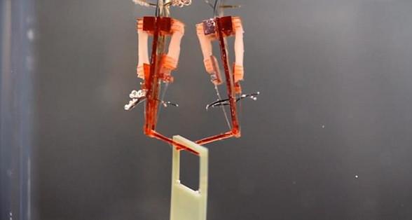 科学家制造出使用真实肌肉机器人 预计10年后量产