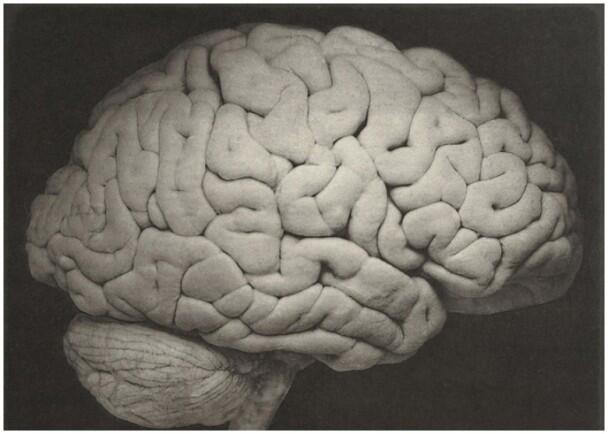 英国研究团队发现人脑DNA区域 可能有助对抗抑郁症