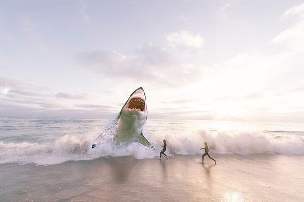 威尔士海滩出现50多条死鲨鱼 怀疑被捕鱼网拖上岸
