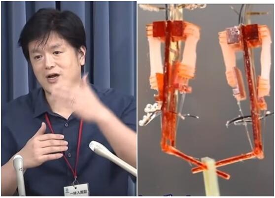 日团队研发手指机器人 靠人工培育肌肉活动