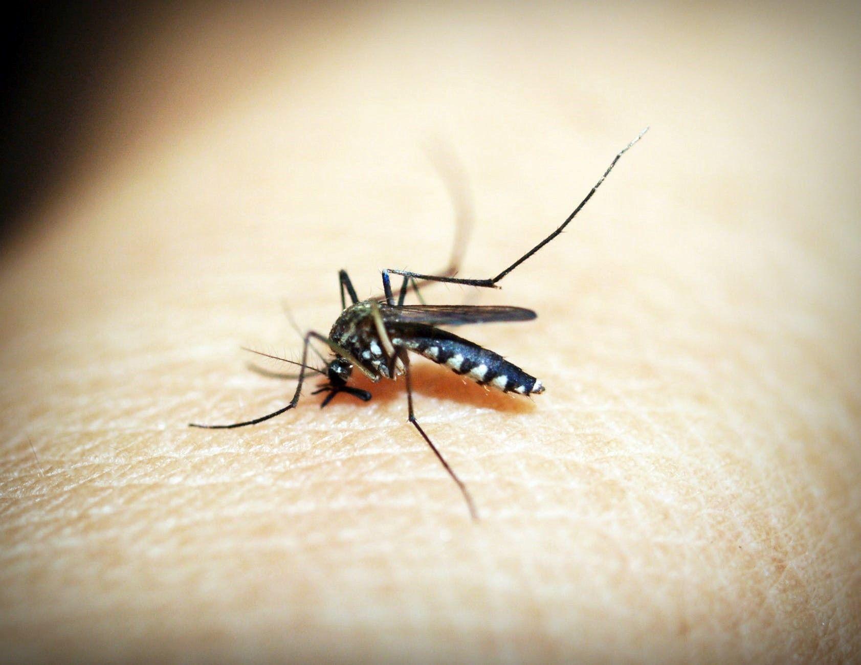 研究:干旱季节蚊子为维持体内水分平衡咬人更狠