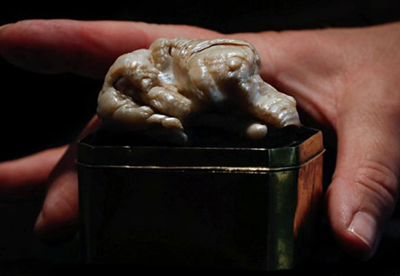 世界最大淡水珍珠以240万成交 形似沉睡的狮子