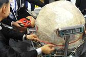 福州现256.6斤重大鱼丸 创下世界纪录