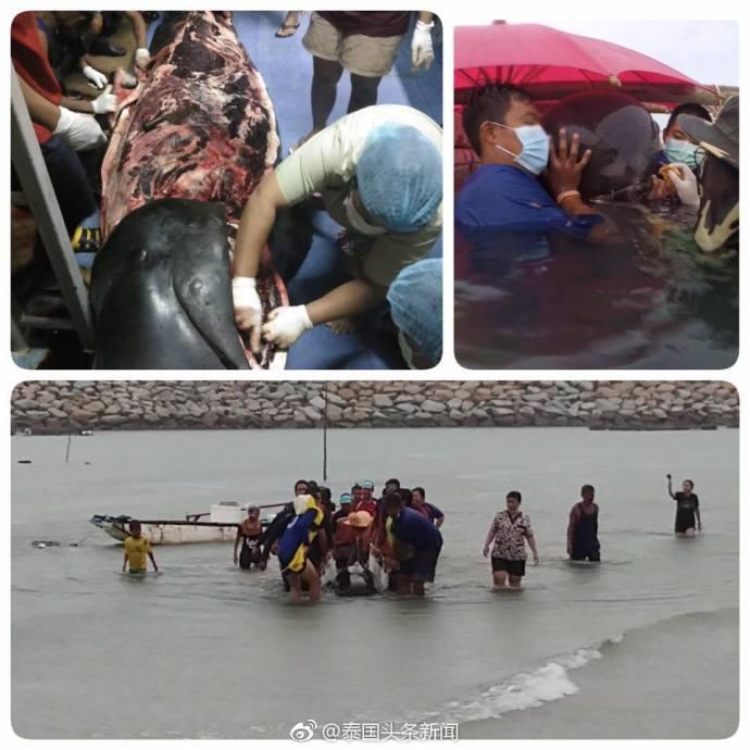 海洋垃圾造成的悲剧!座头鲸误食80个塑料袋死亡