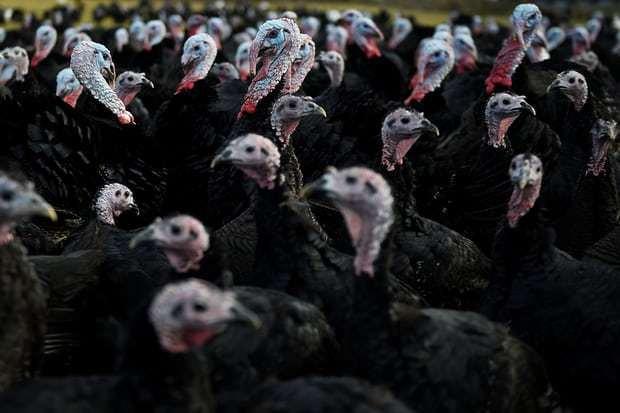 揭秘人类吃肉的隐形成本,放弃肉食可能拯救环境