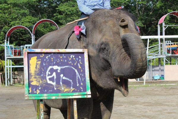 日本大象绘画天赋惊人成大明星 靠卖画给娃儿赚足奶粉钱