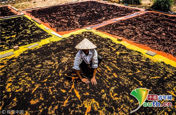 航拍越南农民晒花椒 宛如艺术家在画布上创作