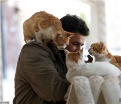 叙利亚阿勒颇的猫咪诊所 170只喵星人在此避难