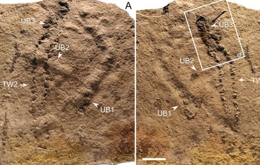 """科学家在长江三峡发现""""地球上最古老的足迹"""""""