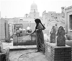 埃及墓地都要种一株仙人掌