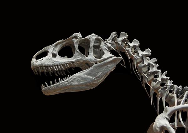 身份不明的恐龙骨架最终卖出1500多万元