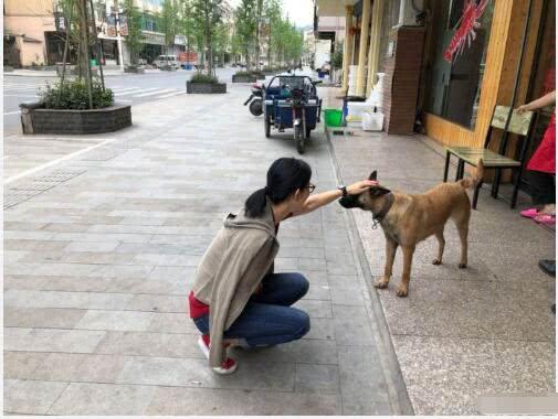 48岁宣萱素颜出镜仍似少女 蹲地抚摸小狗爱心爆棚