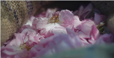 Dior迪奥香水制作 芳香精粹寻香之旅