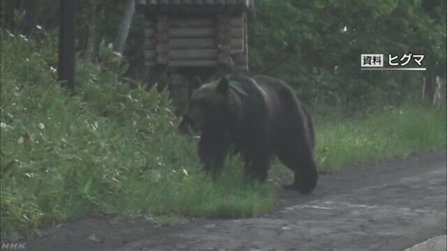 绝迹百年棕熊重现日本北海道 当局:暂无危险不主动驱逐