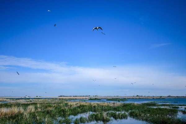 新疆呼图壁荒山变绿洲 水鸟不断增多