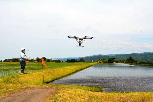 缓解劳动力不足 日本用智能插秧机和无人机耕种水稻