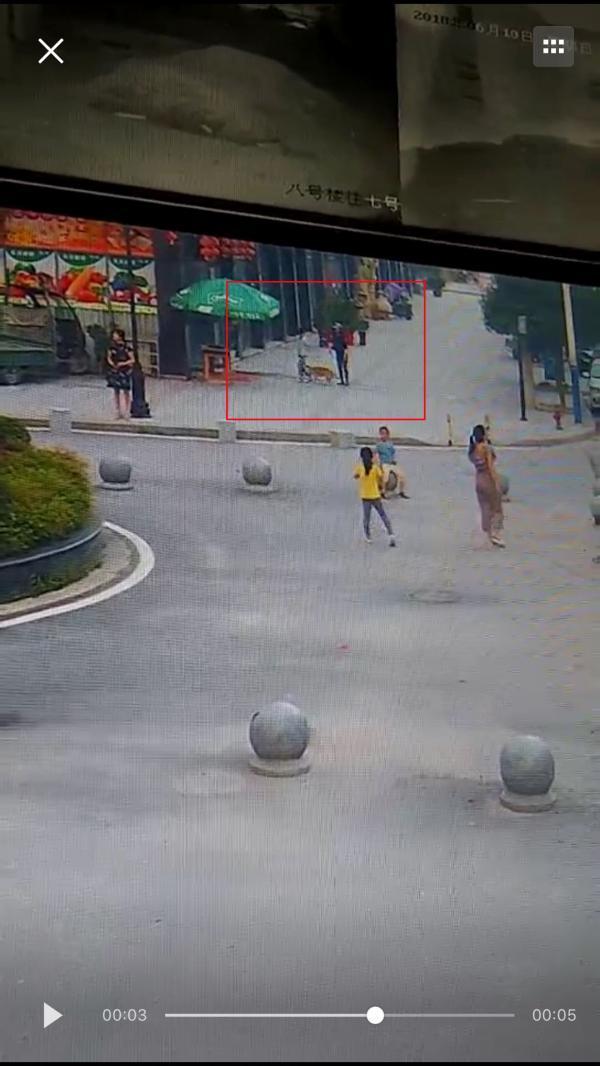 湖北通城疯狗两天咬28人,警方出动全县五分之一警力击毙