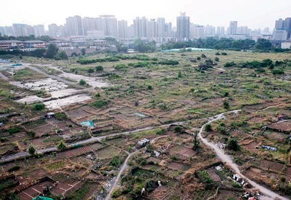 西安闹市现数百亩闲置地 市民开垦种菜