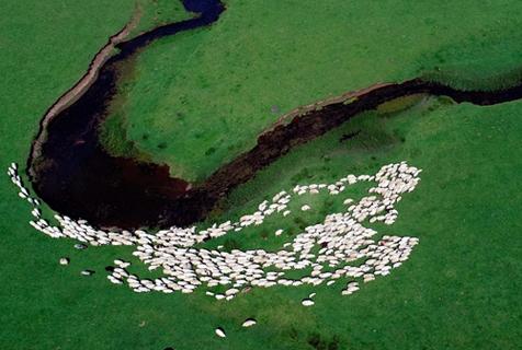 无人机航拍土耳其高地牧羊群 若散落的大米粒
