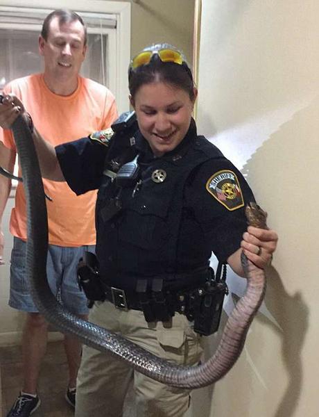 美国女警长赤手帮居民捉蛇获网友赞誉