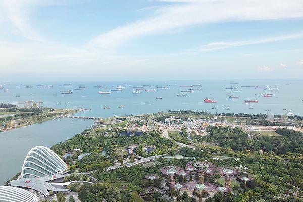 """新加坡给每棵树办""""身份证"""""""