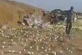 稀奇!垃圾场变质鸡蛋竟孵出数百只小鸡