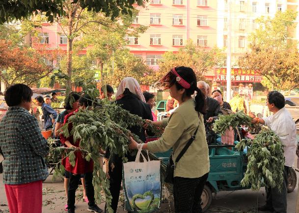 亳州农村七旬老人进城卖一种野草,两元3棵,为什么城里人抢着买