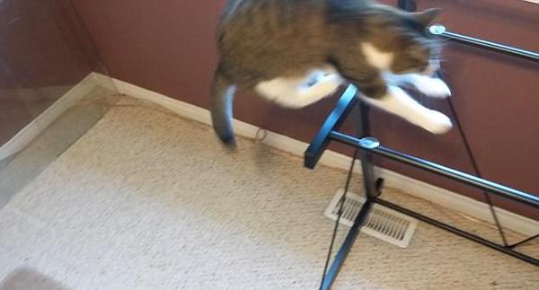 加蠢萌猫咪跳桌踩空 不知桌面已被主人拿走