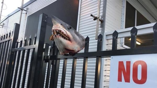 澳洲海洋救援队门口出现被斩首的鲨鱼